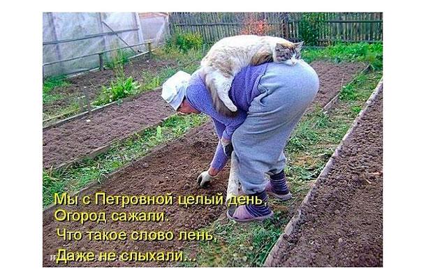День самосада и огорода